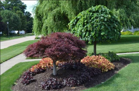 Tree and Shrub Experts